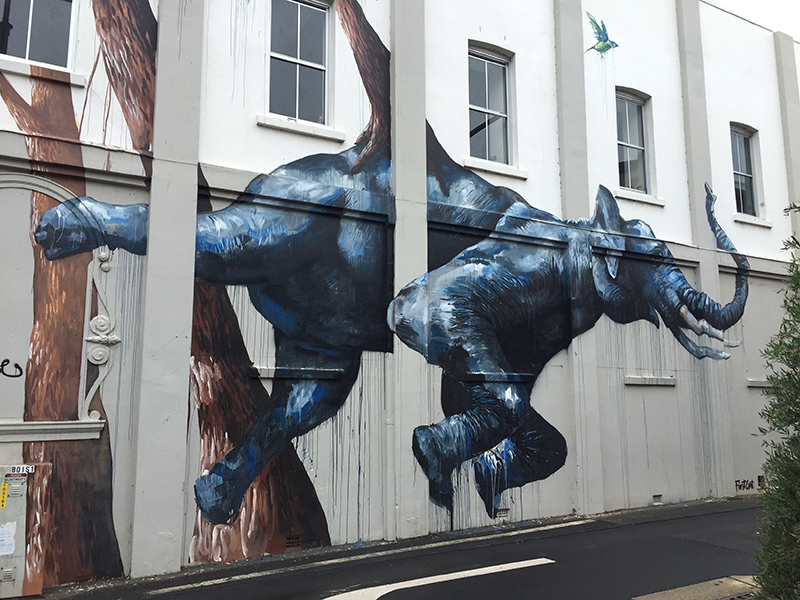 The Elephant, Magee